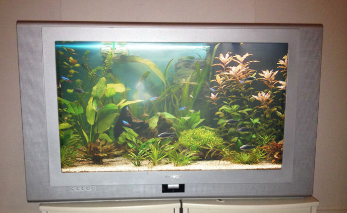 Télévision aquarium